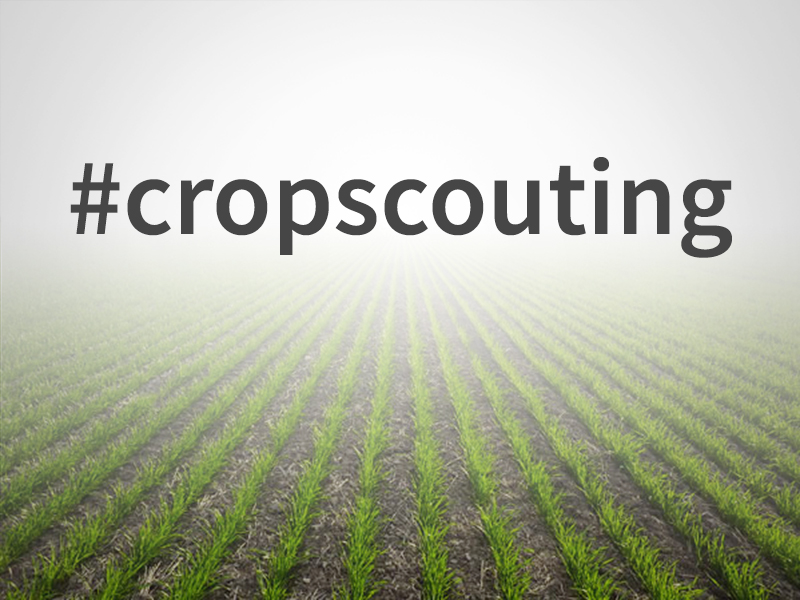 Crop Scouting Tips for 2015